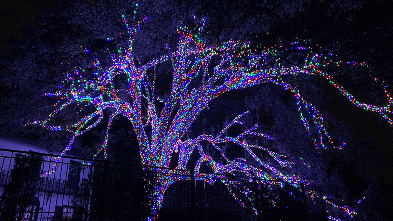 Fun Colorful Trees